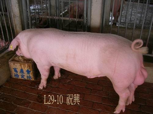 中央畜產會200504期L0029-10拍賣照片