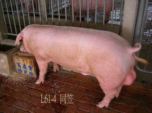 中央畜產會200504期L0061-04拍賣照片