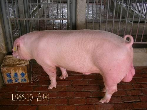 中央畜產會200504期L0966-10拍賣照片