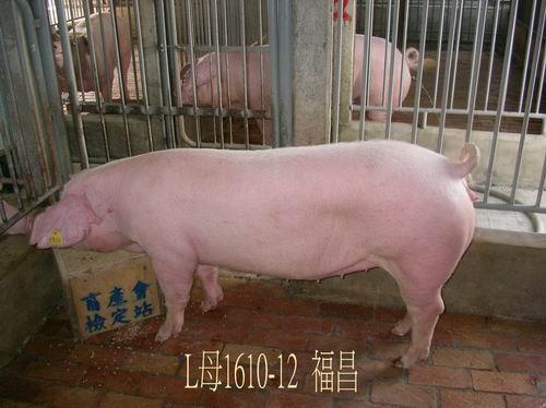 中央畜產會200504期L1610-12拍賣照片