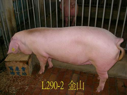 中央畜產會200505期L0290-02拍賣照片