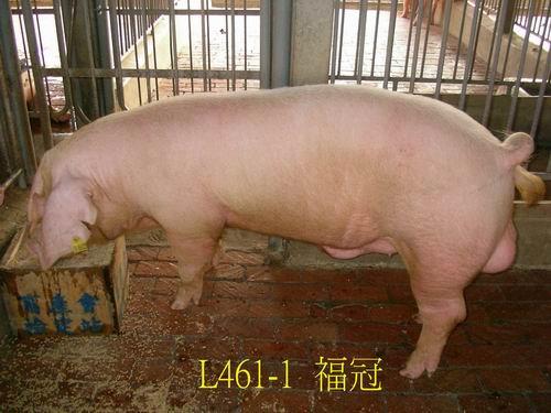 中央畜產會200505期L0461-01拍賣照片