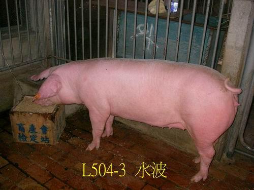 中央畜產會200505期L0504-03拍賣照片