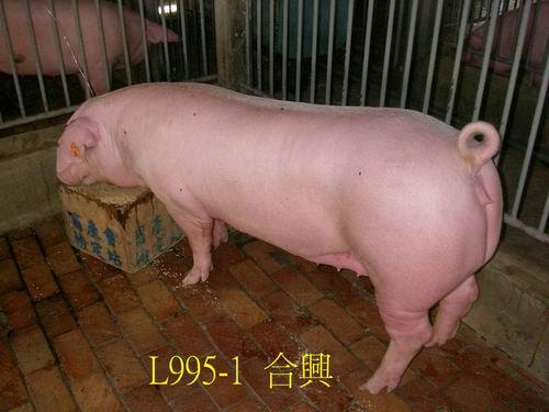中央畜產會200505期L0995-01拍賣照片