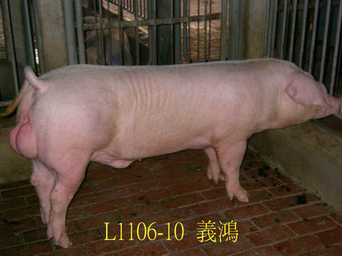 中央畜產會200505期L1106-10拍賣照片