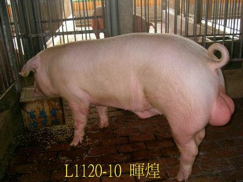中央畜產會200505期L1120-10拍賣照片