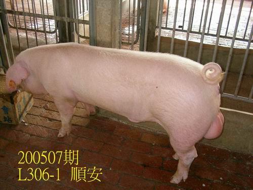 中央畜產會200507期L0306-01拍賣相片