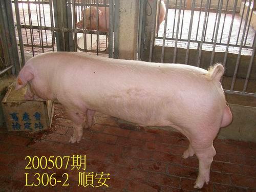 中央畜產會200507期L0306-02拍賣相片