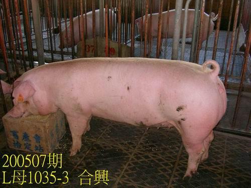 中央畜產會200507期L1035-03拍賣相片