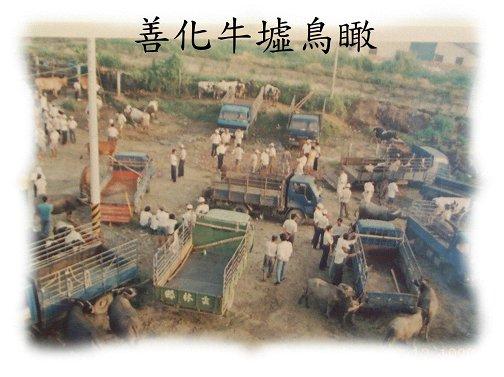 台灣牛圖像 (APEC2003 p51)