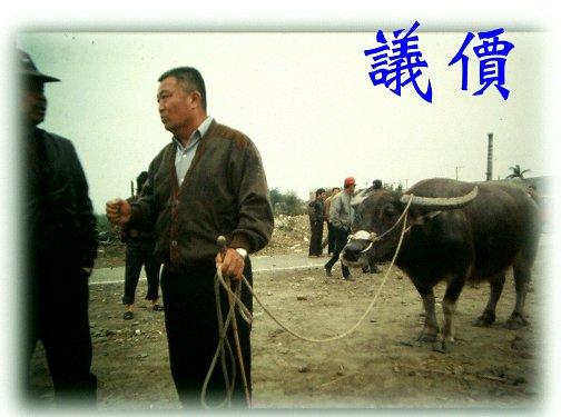 台灣牛圖像 (APEC2003 p53)