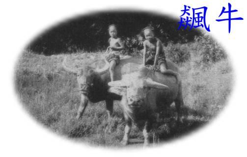 台灣牛圖像 (APEC2003 p57)