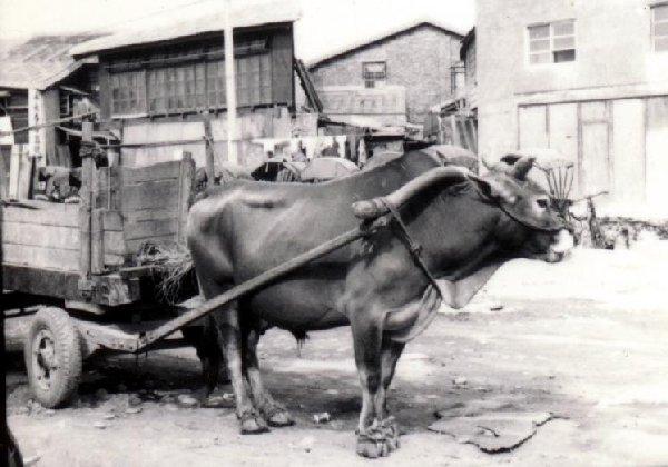 有怎樣的牛便有怎樣的產業文化(APEC2003 p70)