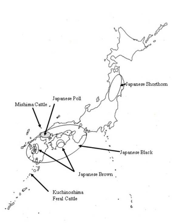日本牛種的遺傳資源(APEC2003 p83)