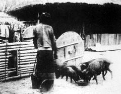 在自然環境與人類文化下作為食肉源的養豬角色(APEC 2003 p136)
