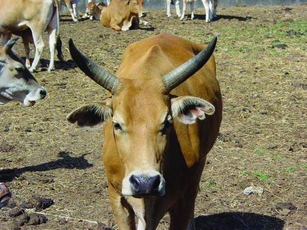 畜產種原紀錄(2)- 畜產生物品種資源 p2
