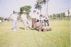 桃園豬保種環境 (6)(畜產種原庫及基因交流p4)